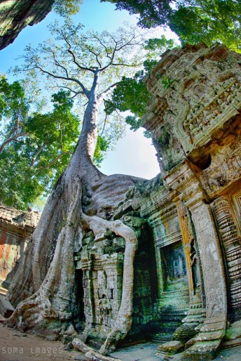 Banyan tree grows from Ta Prohm temple, Angkor Wat, Cambodia