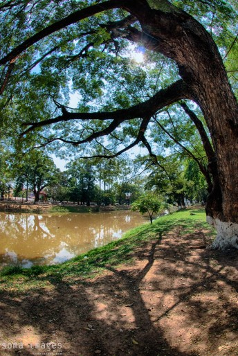 Trees creating shade, riverbank, Angkor Wat in Cambodia