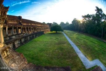 Lone tree, courtyard, Angkor Wat, Cambodia