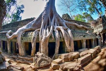 Ta Prohm temple, Angkor Wat , Cambodia